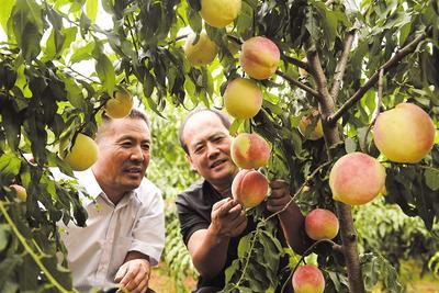 深圳针对农残含量进行快筛检测不定期对全区农产品随机取样